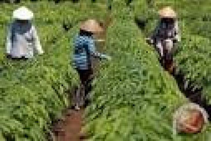 Distanak Banten Terapkan Ptt Dongkrak Produksi Pertanian Antara