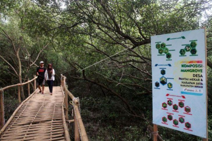 Pemkab Tangerang Kembangkan Objek Wisata Hutan Bakau