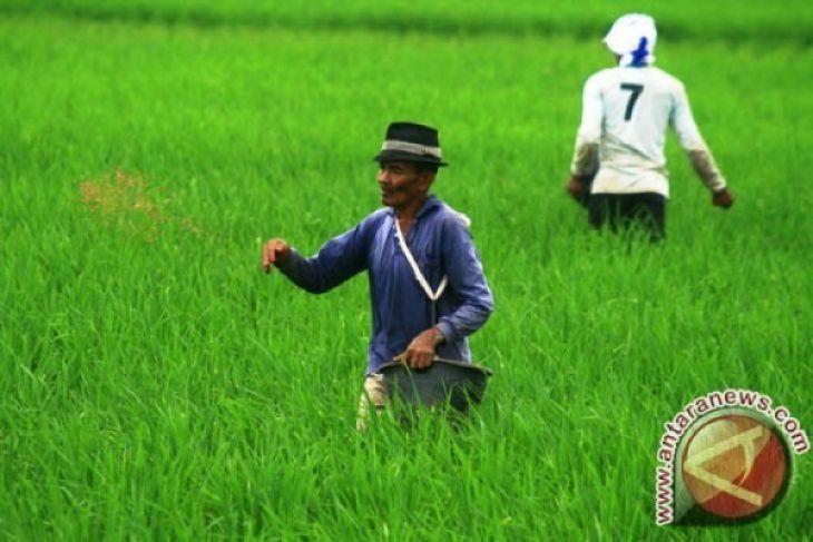NTP Banten Juni Naik 0,07 Persen