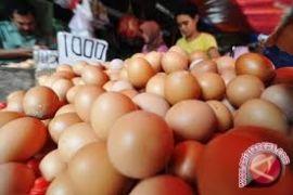 Jelang Ramadhan harga telur ayam naik