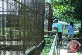 Pengunjung taman satwa Bengkulu meningkat