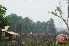 Warga soroti pembukaan hutan dijadikan perladangan
