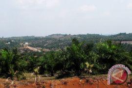 Distan targetkan peremajaan 3.000 hektare sawit