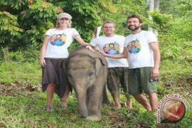 Kementerian Lingkungan Susun Rencana Aksi Koridor Gajah