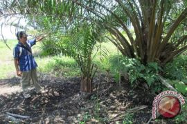 Distan apresiasi Poktan Mukomuko swadaya petakan sawit