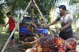 Tim perumus tetapkan harga sawit di Bengkulu naik