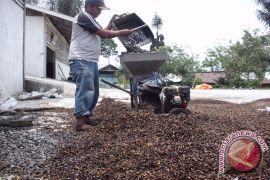 Kopi di Rejang wangi di Lampung
