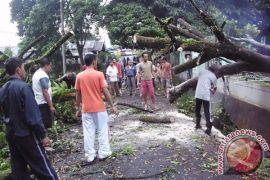 Wali Kota: Mereka Berlebihan Sikapi Penebangan Pohon