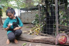 Bengkulu Selatan kekurangan dokter hewan