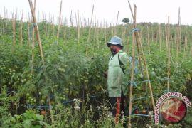 Nilai tawar petani Rejang Lebong rendah