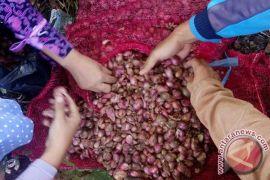 Teramang Jaya jadi wilayah pengembangan bawang merah