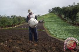 Petani Bengkulu Selatan jarang gunakan pupuk organik