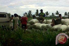 Bulog siap tampung beras petani Mukomuko