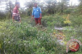 Petani Rejang Lebong Kembangkan Pertanian Organik
