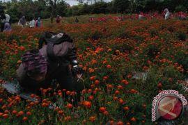 Sejumlah taman bunga di Rejang Lebong belum berikan kontribusi