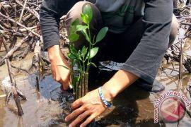 Mukomuko Tidak Izinkan Penanaman Mangrove Dalam CA
