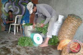 Harga sayuran di Rejang Lebong melambung