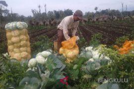 Petani sayur Rejang Lebong keluhkan maraknya pencurian