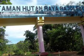 Pemda Bengkulu Tengah kelola Tahura Rajolelo