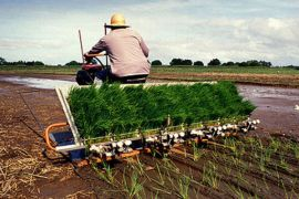 Mahasiswa STPP demonstrasikan mesin tanam padi