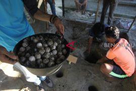 Komunitas tangkarkan 2.055 butir telur penyu