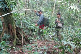 TNKS: Belum ada hutan marga dalam kawasan