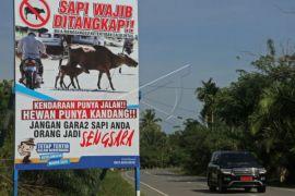 Perbup larangan lepasliarkan ternak diperlakuan, hewan bisa ditembak