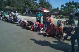 Mahasiswa Jambi pelajari konservasi penyu di Bengkulu