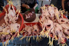 Bulog Bengkulu siapkan lima ton ayam beku