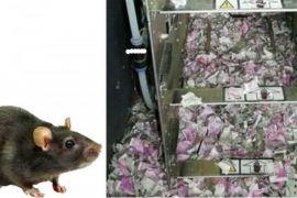 Tikus makan uang kertas 18.000 dolar di ATM