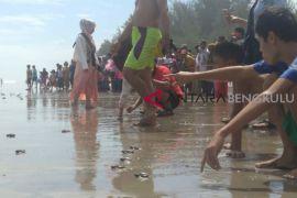 Wisatawan lepas ratusan tukik Pantai Air Hitam