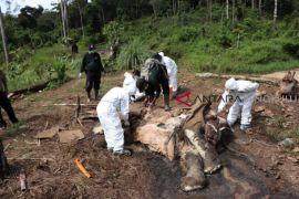 Satu bangkai gajah ditemukan di Mukomuko