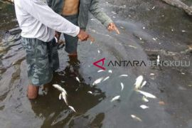 Uji laboratorium sample ikan mati di sungai batal