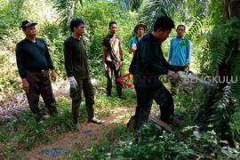 LHK Bengkulu bersihkan 220 ha sawit di hutan