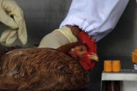 Waspada flu burung di Malaysia, Kementan larang pemasukan produk unggas