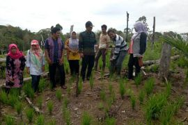 Seluruh lahan kering Mukomuko ditanami padi gogo