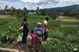 Puluhan hektare sawah petani Rejang Lebong terancam kekeringan