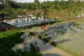 Bengkulu Selatan salurkan 50 ton benih padi