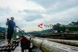 Potensi perikanan air tawar Bengkulu Selatan menjanjikan