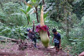 Bengkulu usulkan pembangunan kebun raya ke LIPI