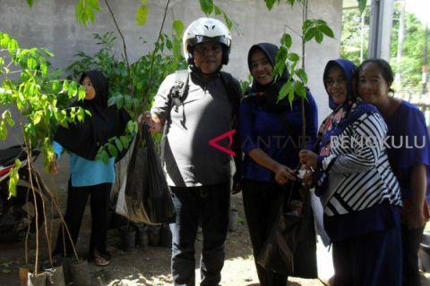 Petani Bengkulu didorong budidaya kayu bawang