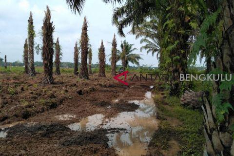 Petani Mukomuko siapkan lahan untuk tanam padi