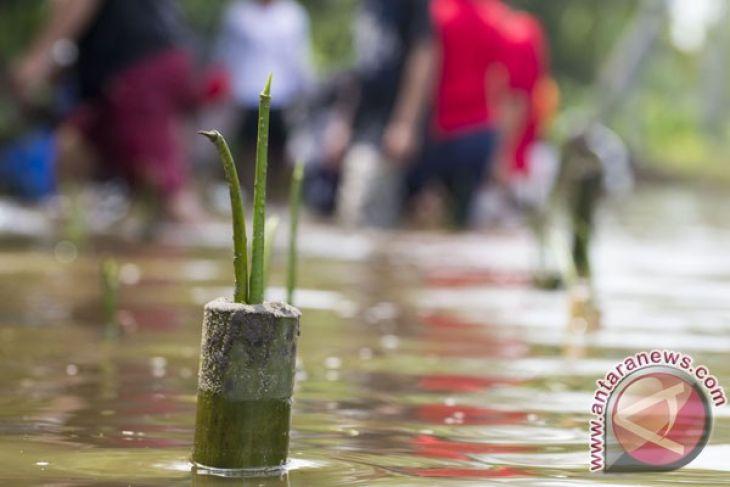Aktivis tumbuhkan mangrove di Pulau Tikus Bengkulu