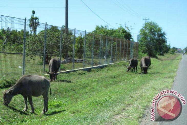 Mukomuko bangun fasilitas penunjang penertiban ternak berkeliaran