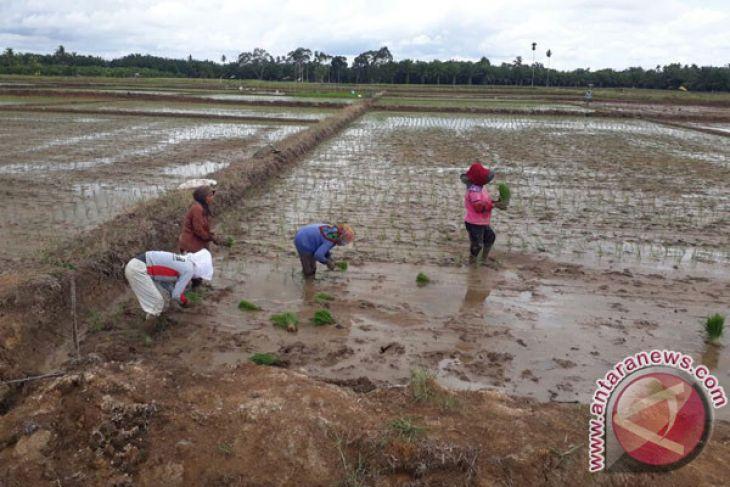 Pemprov Bengkulu bangun embung untuk lahan padi-jagung di Mukomuko