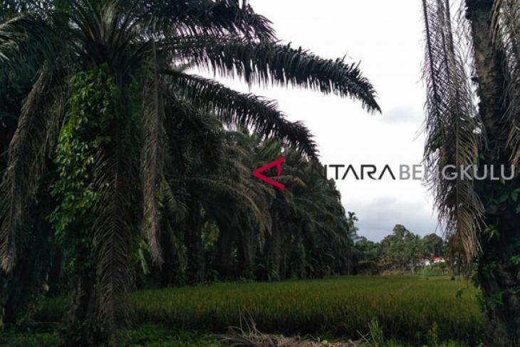 Gubernur Bengkulu dorong petani tingkatkan produksi unggulan