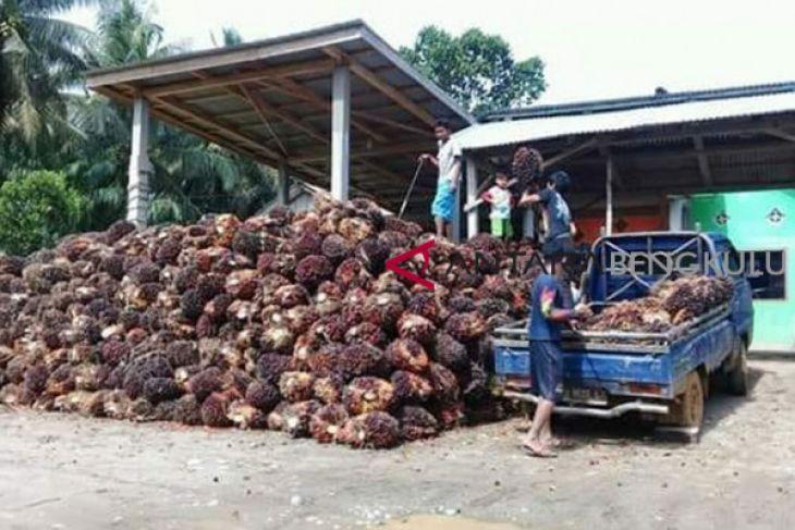Gapki: Pemerintah harus segera atasi anjloknya harga sawit
