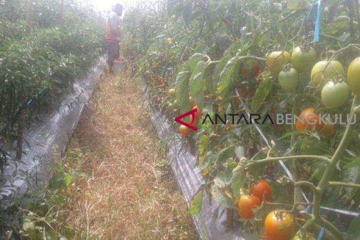 Distributor sayuran kurangi pembelian jelang lebaran