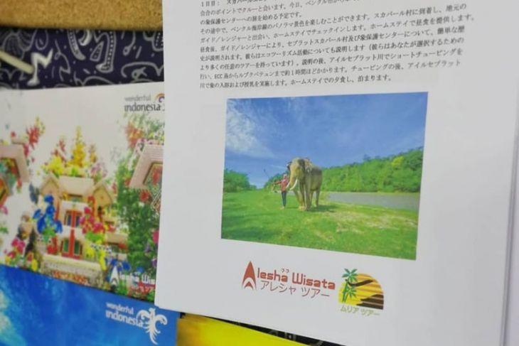 Bengkulu promosikan ekowisata gajah Seblat di Jepang