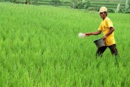 Distan Karawang imbau petani gunakan pupuk organik